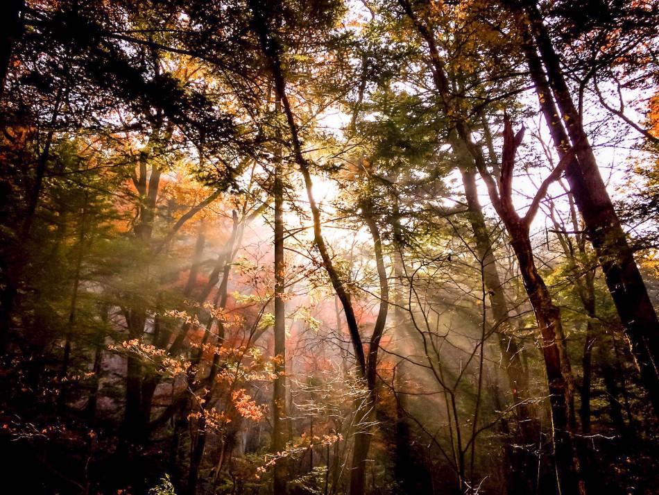 SunghoonLee04-trees1