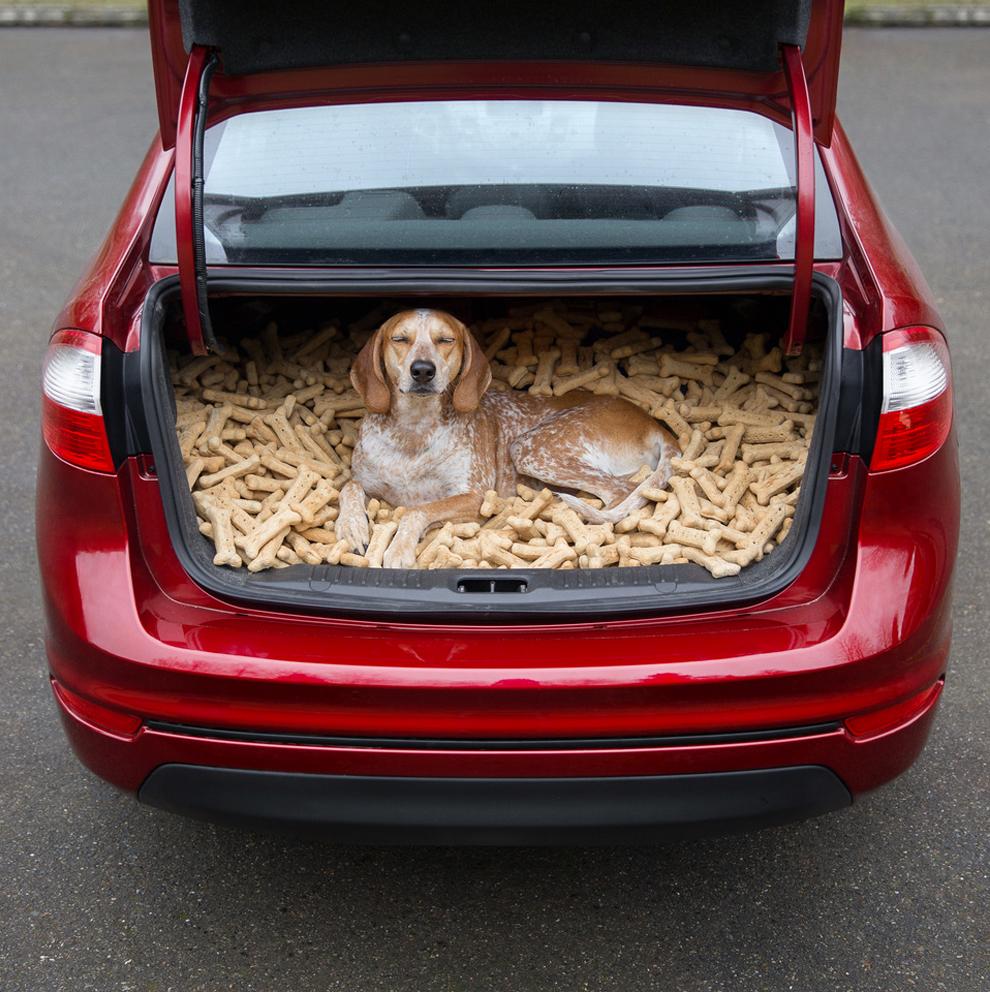 В путь с собакой в багажнике