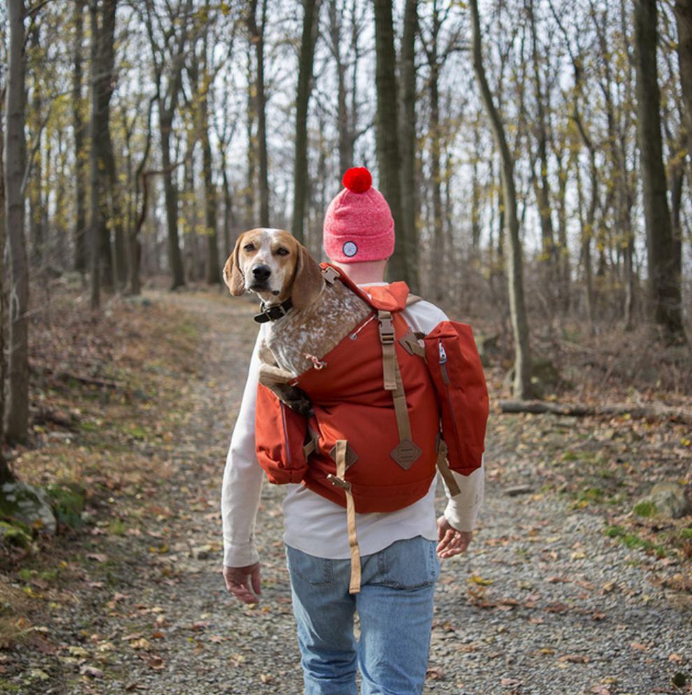 В путь дорогу с собакой Терон Хамфри