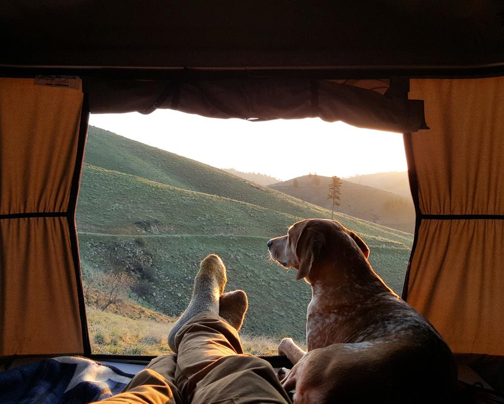 Красиво собака и горы