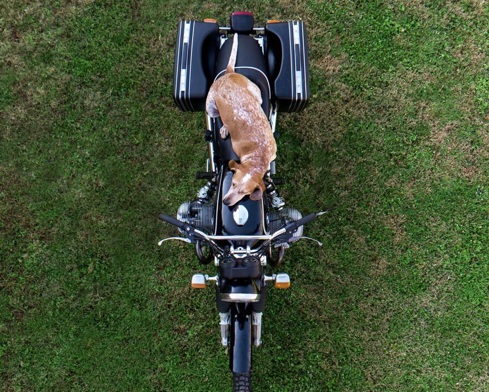 собака на мопеде