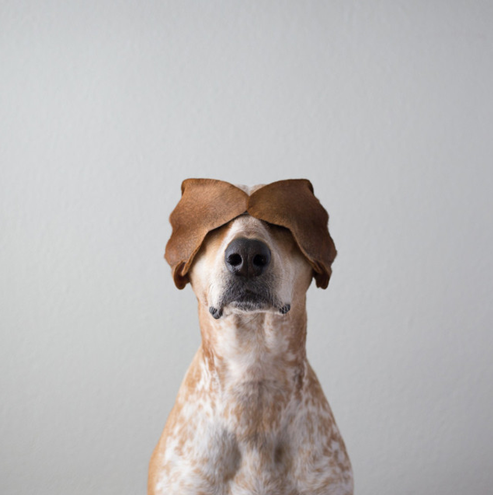 Необычное путешествие по США одной собаки
