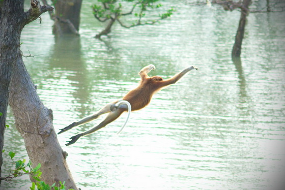 diving-proboscis