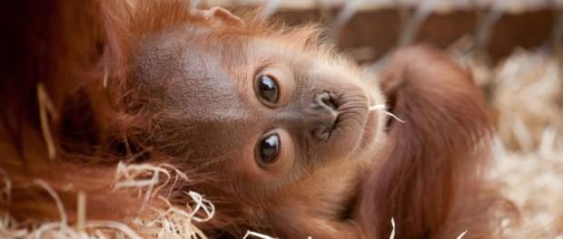 Первые шаги во взрослую жизнь из мира животных