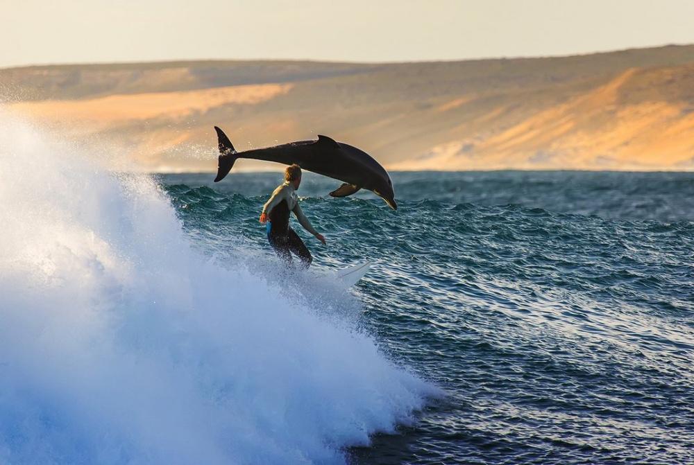 На одной волне позитива  с дельфинами