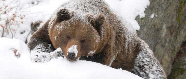 Космонавтам будут помогать бурые медведи