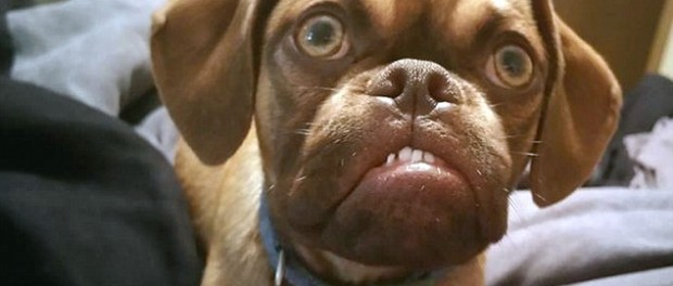 В ответ на сердитого котика в сети появился хмурый песик