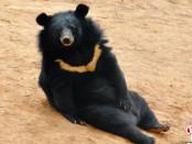 собака превратилась в медведя
