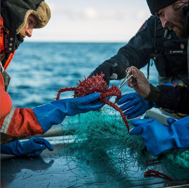 кросовки адидас из рыболовных сетей