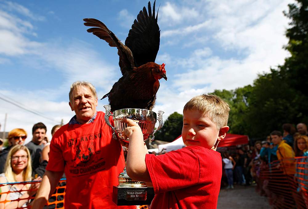 Победитель британского чемпионата «Куриные бега»