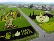 картины на рисовых полях в Японии