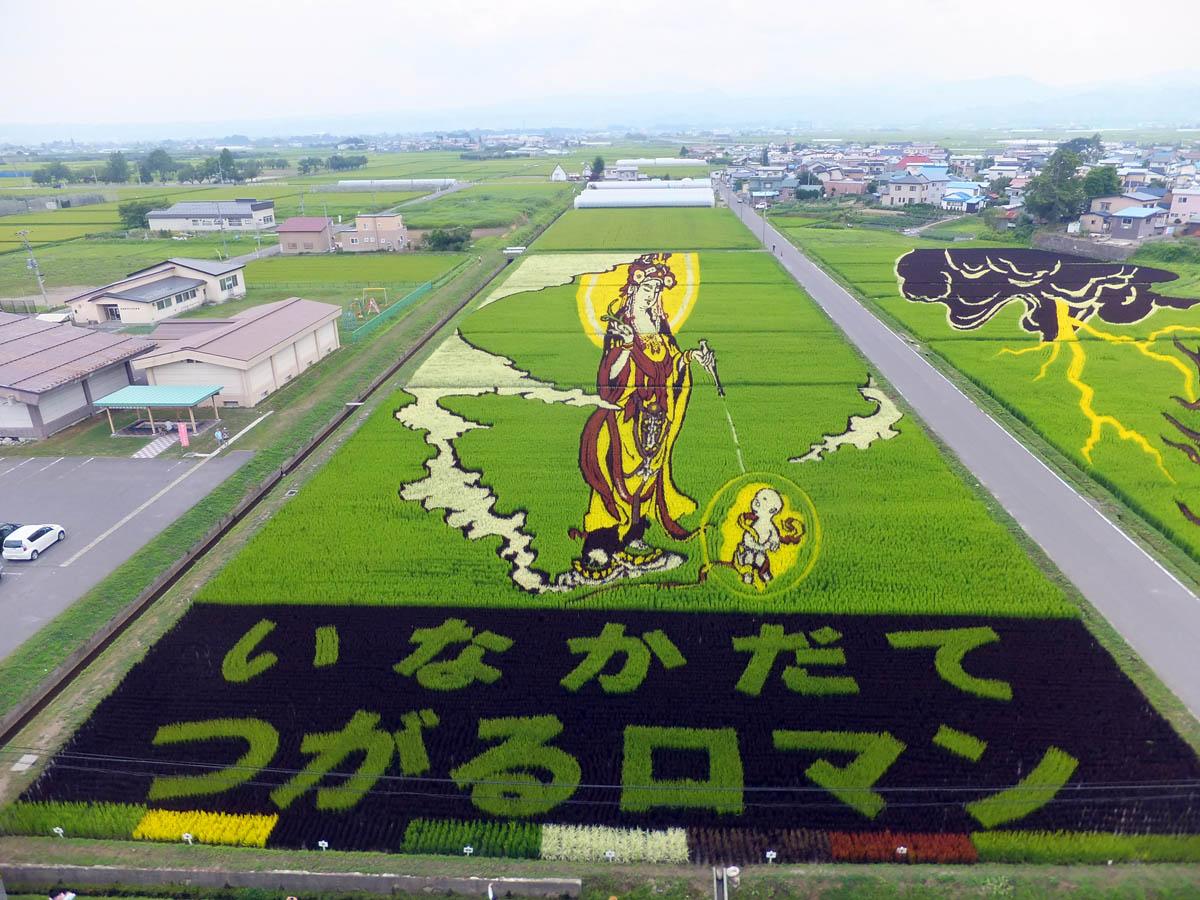 японцы создали оригинальные картины на рисовых полях