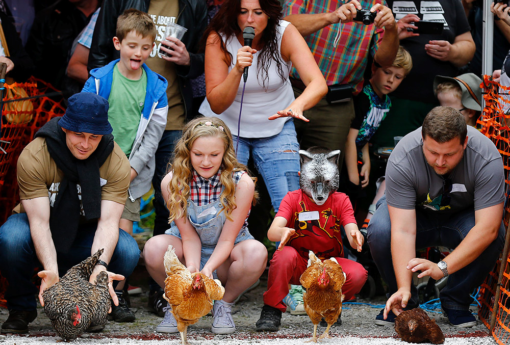 курицы бегут