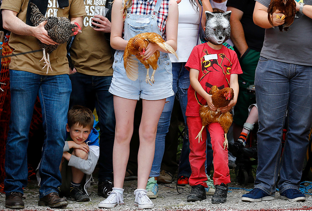 куриные забеги в Британии
