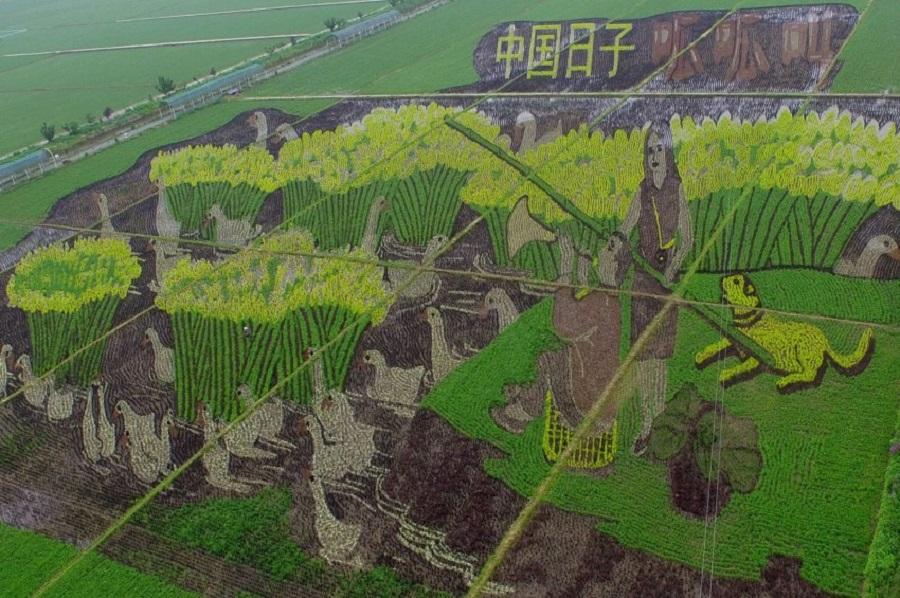 необычные картины на рисовых полях