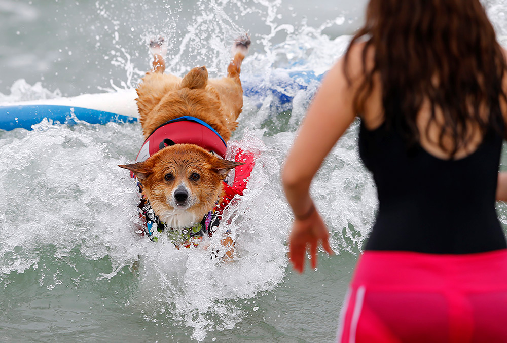 собаки покорители волн