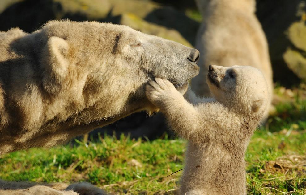 медвежьи обнимашки