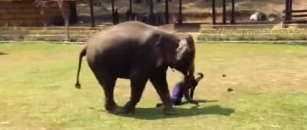 Тайский слон стал на стражу порядка