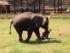 слон разнял дерущихся