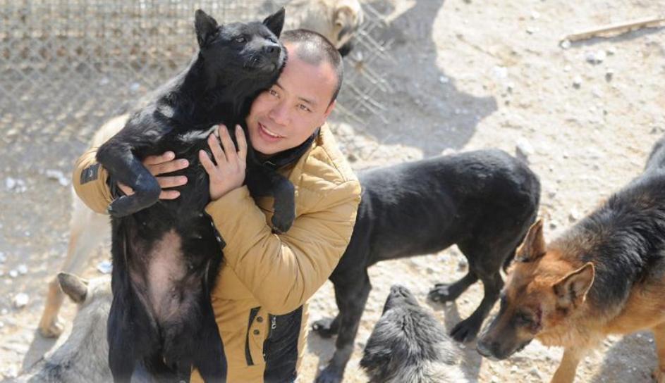 любимые собаки китайского миллионера