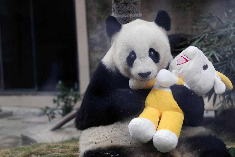 позитивная панда отмечает 35 лет