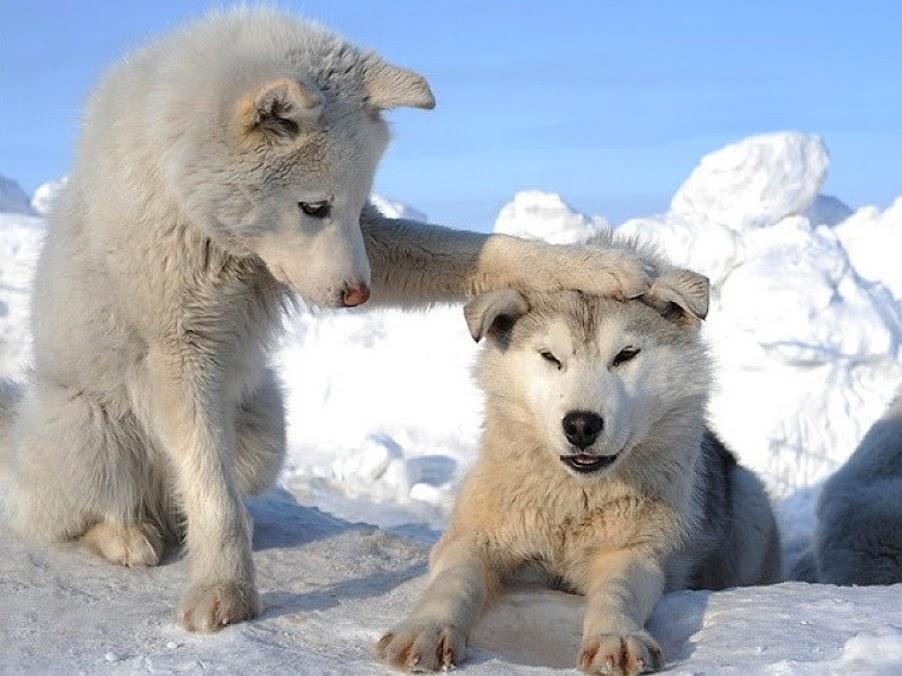 собаки вылились в отдельный вид