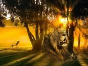 доброе утро со львами