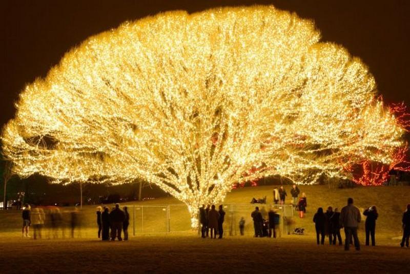 Позитивное дерево 1000 огней