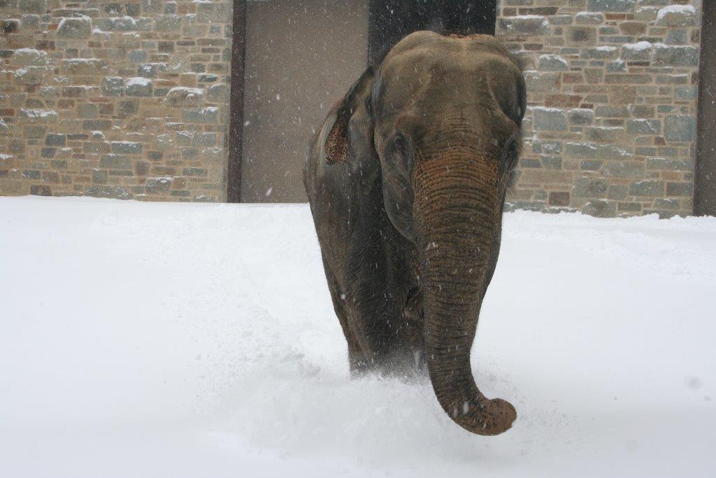 И слоны иногда в жизни видят снег