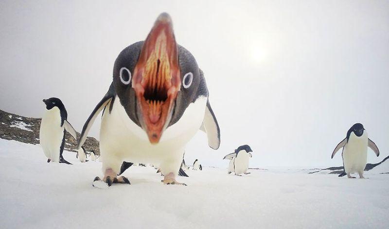 Глупый пингвин