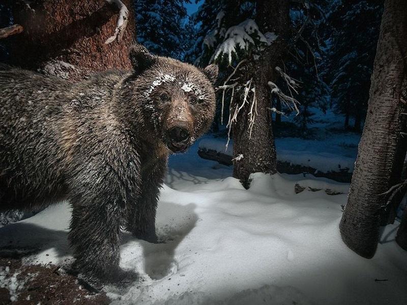 Медведя звали?