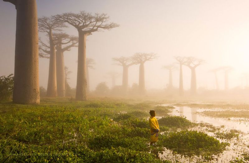 Невероятный лес Мадагаскара