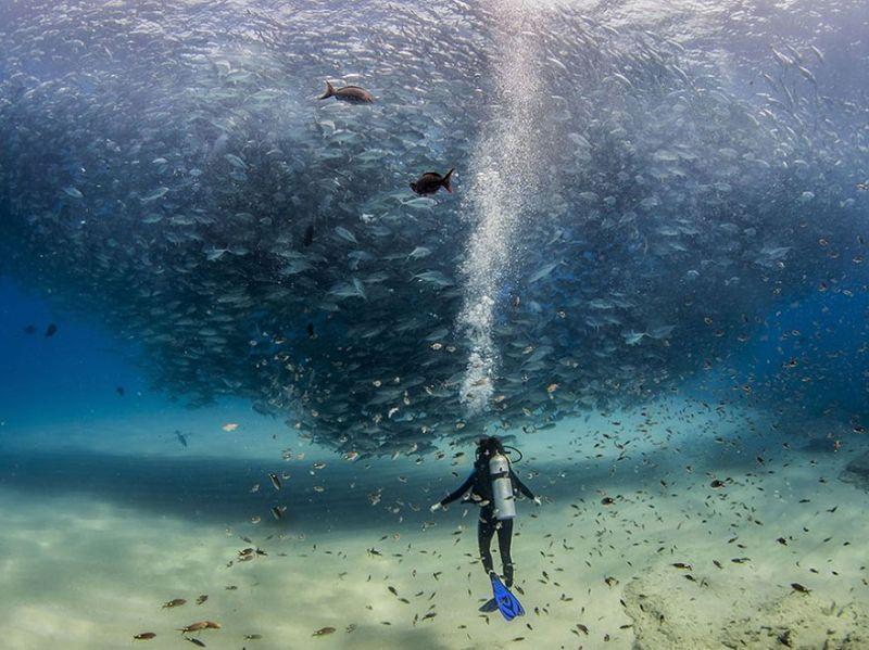 В океане рыб