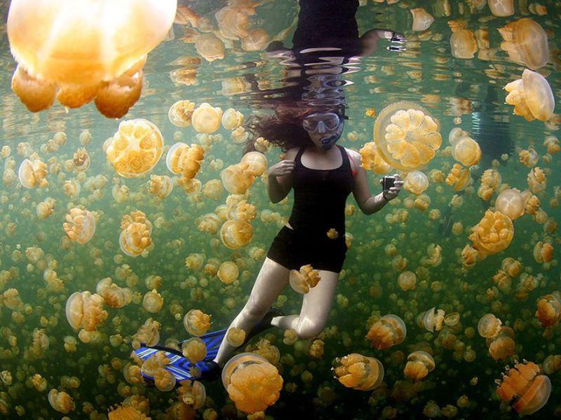 В море медуз