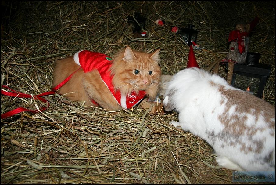 ездовой кот3