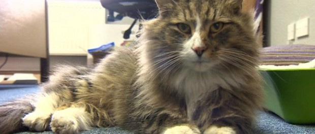 Кошачья пропажа нашлась, но потяжелела на пару кило