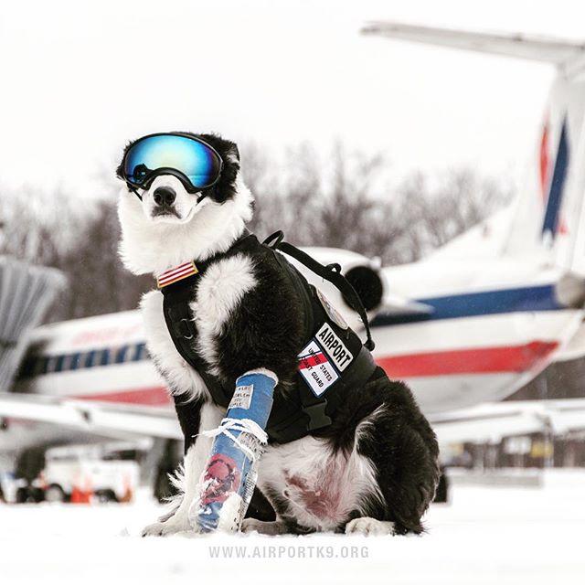 пес-охранник10