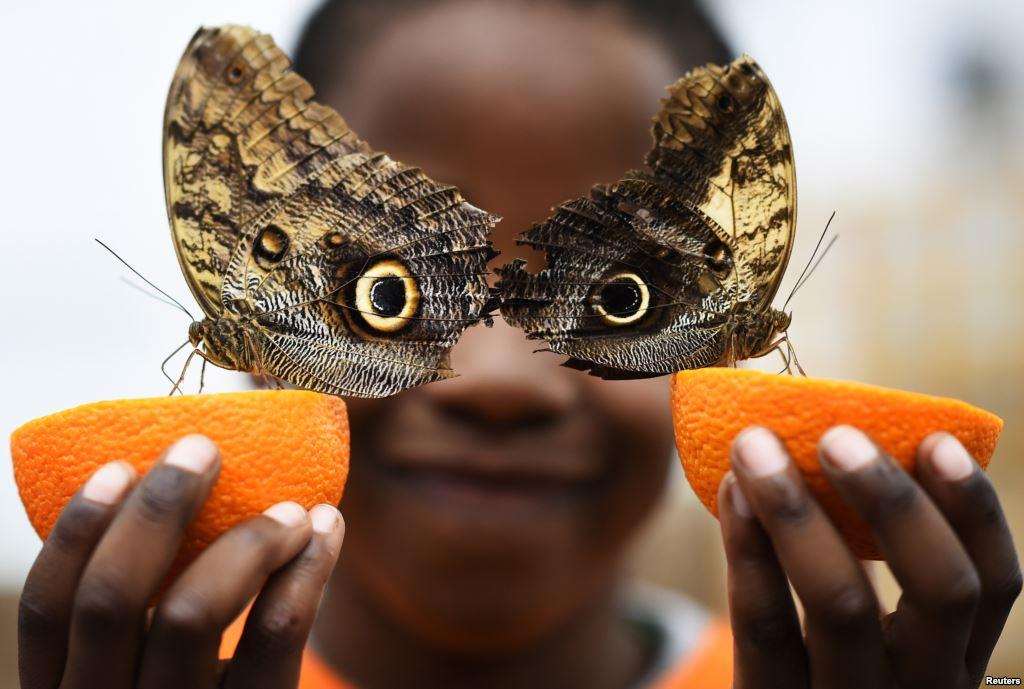 Оригинальная иллюзия из бабочек