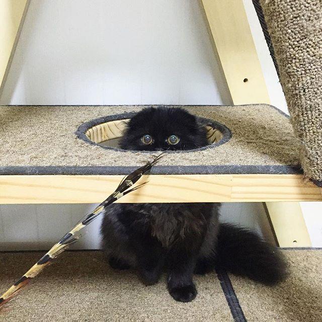 милый черный кот