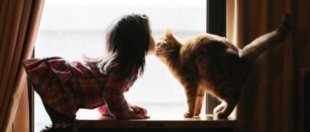 Человечество через пять лет узнает язык кошек