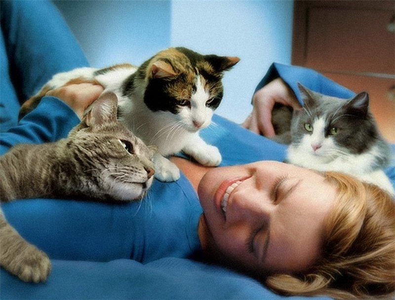разговор по душам с котом - вскоре станет реальностью