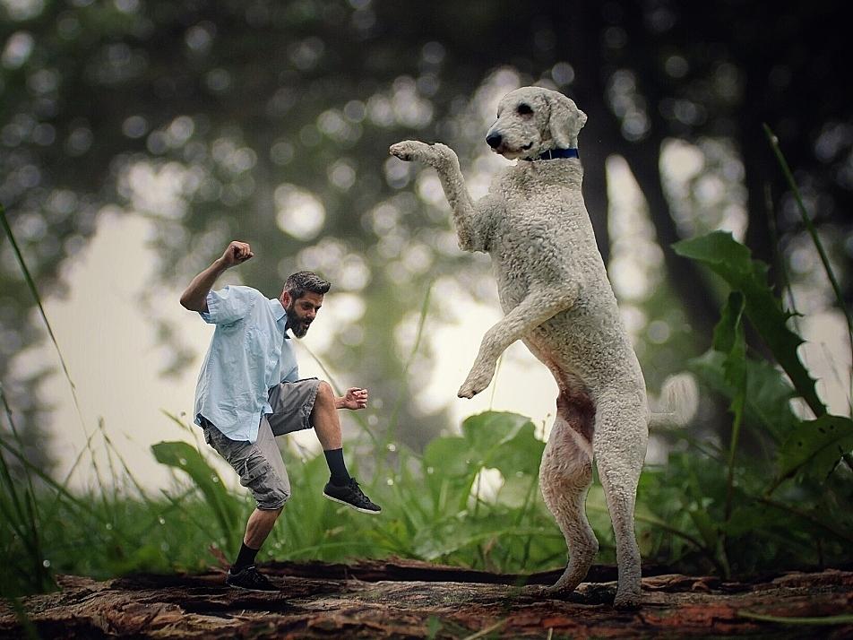 пес-гигант13