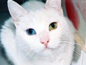 Cat_Eyes
