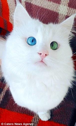 Cat_Eyes2