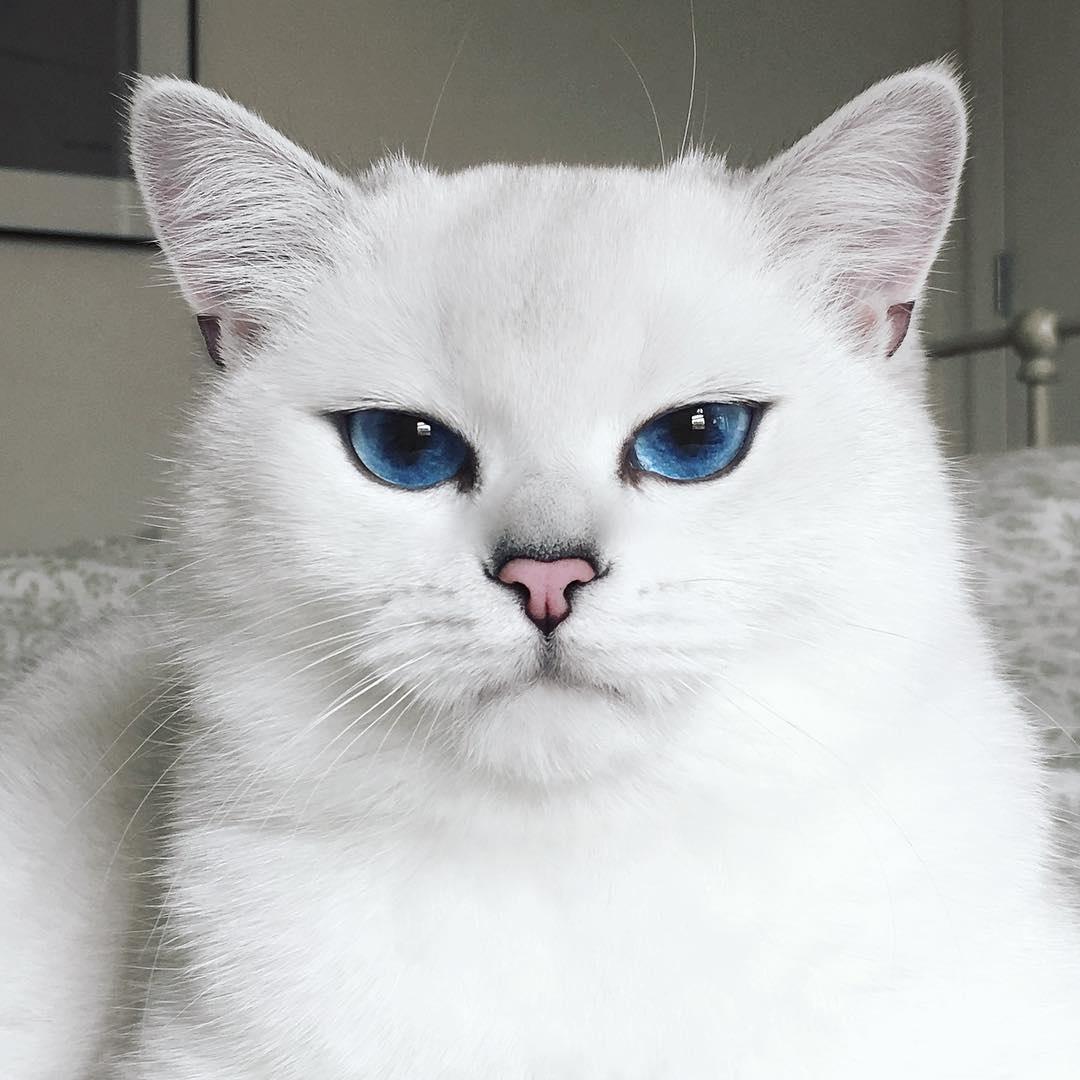 Cat_Eyes6