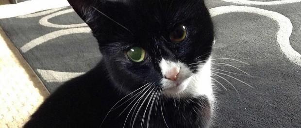Самая везучая кошка выжила после нескольких выстрелов дробью