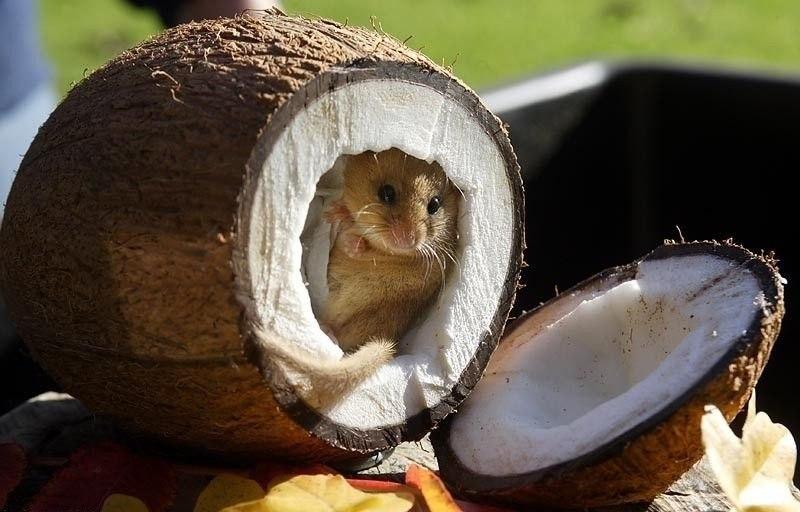 Вот он - настоящий кокосовый рай