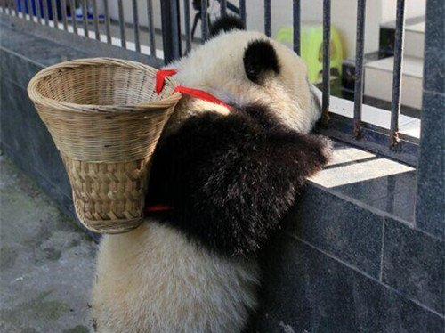панда с корзиной