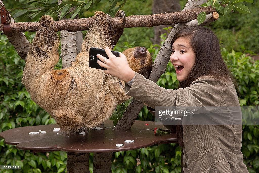 Обои для рабочего стола панда бамбук морда медведь