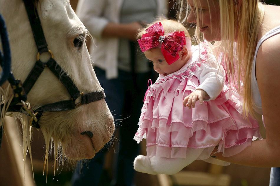 на ярмарке Appleby Horse Fair